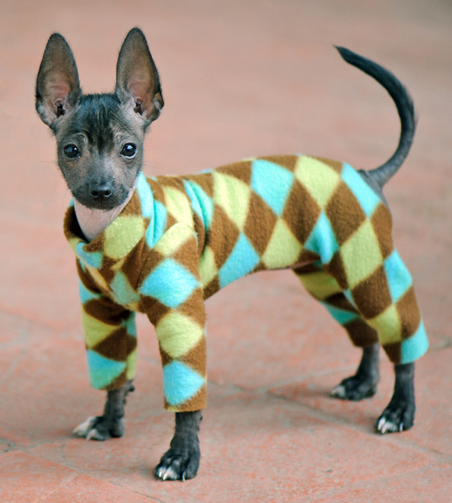 Pajamas For Toy Breed Dogs
